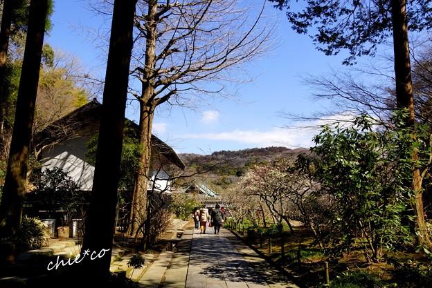 鎌倉-049