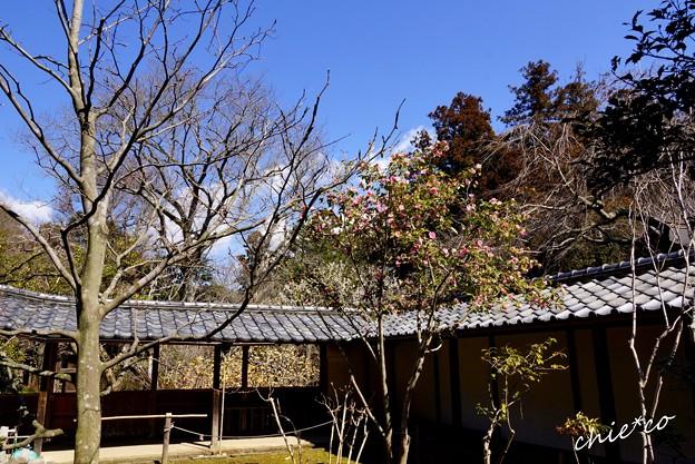 鎌倉-126
