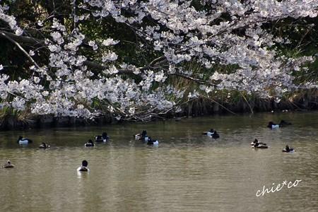三渓園~春~-138