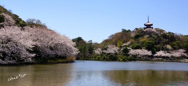 三渓園~春~-141