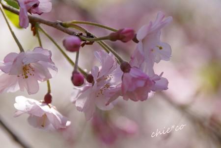 三渓園~春~-152