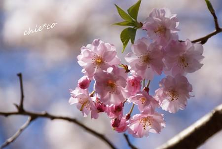 三渓園~春~-165