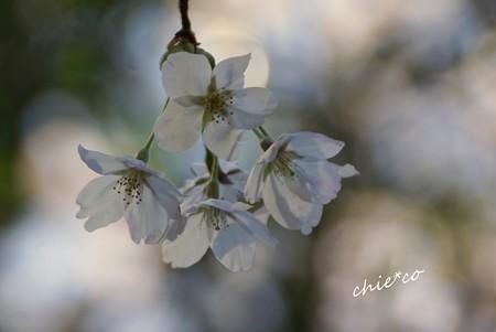 三渓園~春~-174