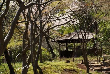 三渓園~春~-234