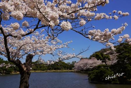 空のいろ。桜のいろ。。