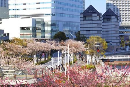 桜彩の路・・