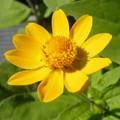 よく見る此花は・・・