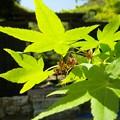 お庭の新緑