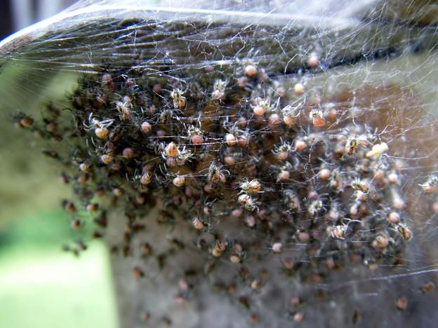 Photos: 蜘蛛の子を散らす・・・