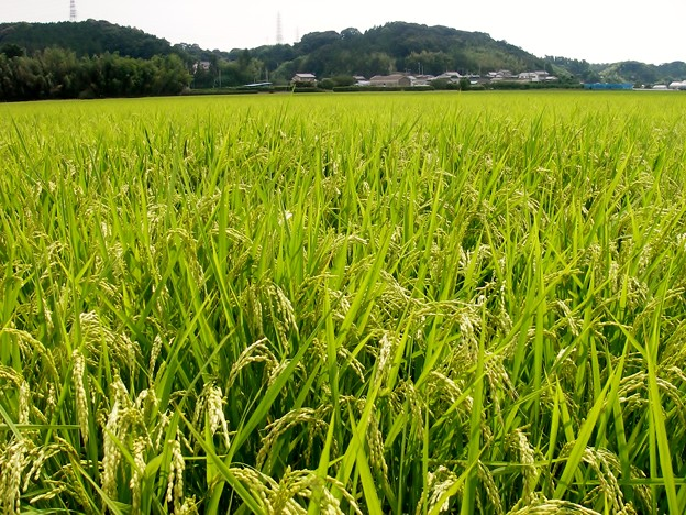 Photos: 夏 我が町