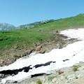 自然観察路すぐ脇には雪渓が