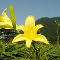 Photos: 榛名山とユウスゲ