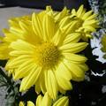 鉢植えの花