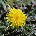 Photos: 野の花も