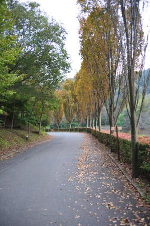 モビのゲートからのアクセス路の並木