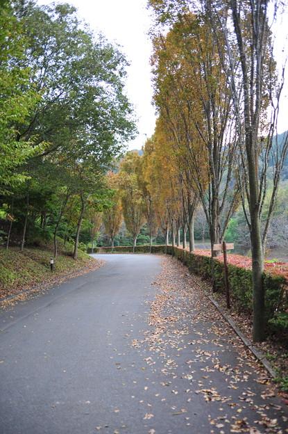 写真: モビのゲートからのアクセス路の並木