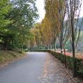 Photos: モビのゲートからのアクセス路の並木