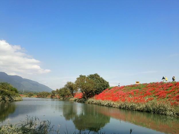 彼岸花を見に、津屋川の堤防...