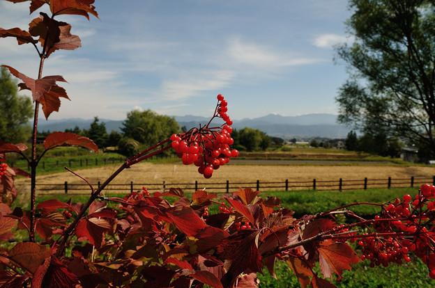 安曇野の秋