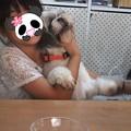 Photos: 新太のお見合い??