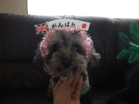 日本、チャチャチャ♪