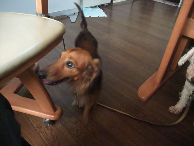 Photos: 犬にも友好的で