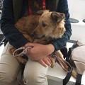 Photos: 犬に怖がり避難中