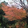 Photos: 紅葉の下では