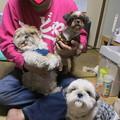 Photos: 杏に家族が出来ました