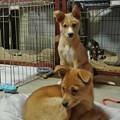 Photos: 我が家にやって来た子犬たち
