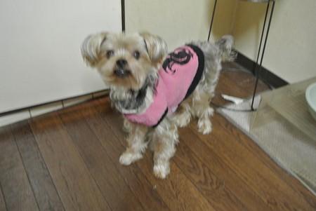 ピンクの服も似合ってしまう
