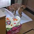 Photos: 猫のトイレを嗅いだ時