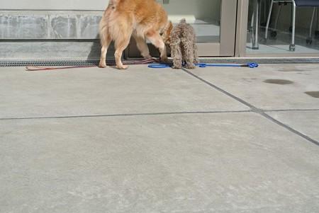 小さな犬とも仲良く出来て