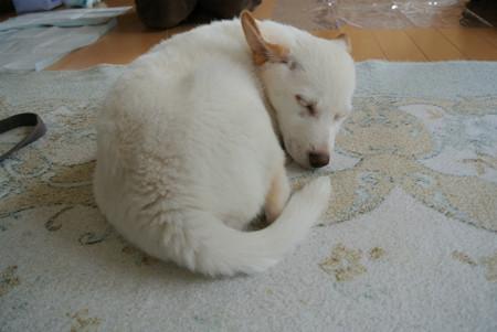 部屋のど真ん中で寝ちゃった