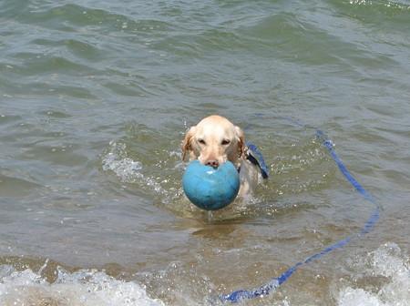 水を含んだ重いボールを運ぶ紫音