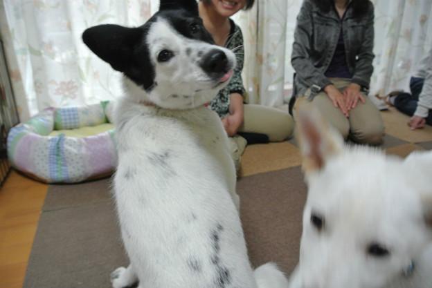 Photos: 大成功?!
