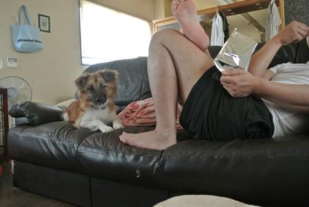 旦那と同じソファーにも乗れるようになりました