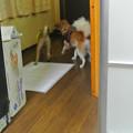 Photos: 子犬同士