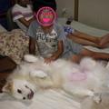 Photos: おにいちゃん達と寝てるんだね~