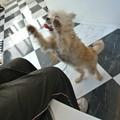 Photos: 前足大きく上げて歩くんだい♪