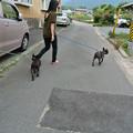 Photos: ママとお姉ちゃんとお散歩