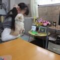 Photos: 先代犬にご挨拶