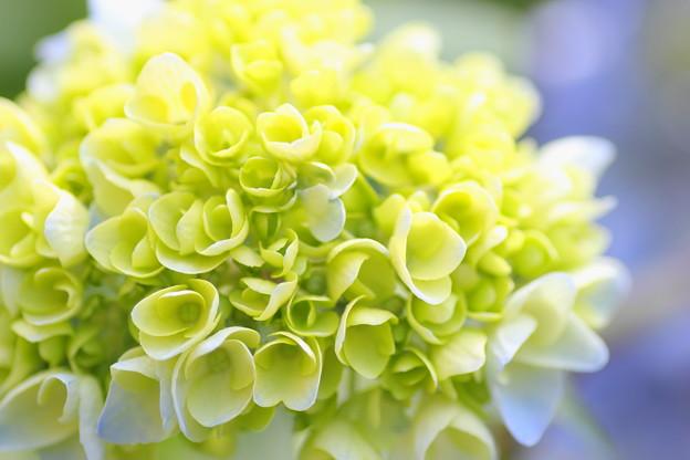 ブーケのような花
