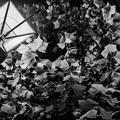 Photos: 深夜の街路樹
