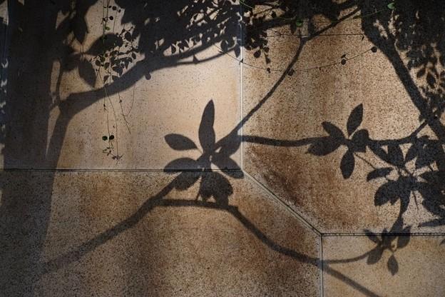 Photos: 樹影