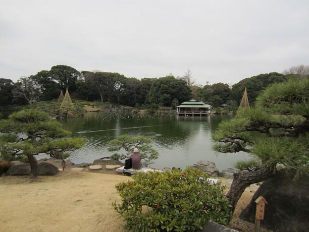 清澄庭園の池