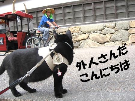 今日の旅26_彦根城