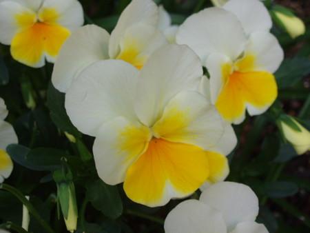 自由花壇 2013年5月