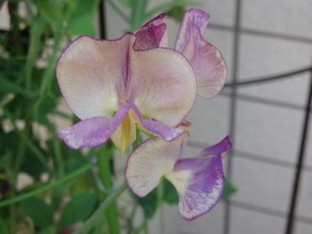 2013年5月13日 Yさん自由花壇