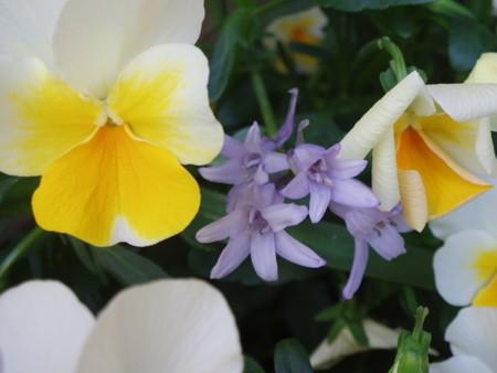 2013年5月13日 Tさん自由花壇